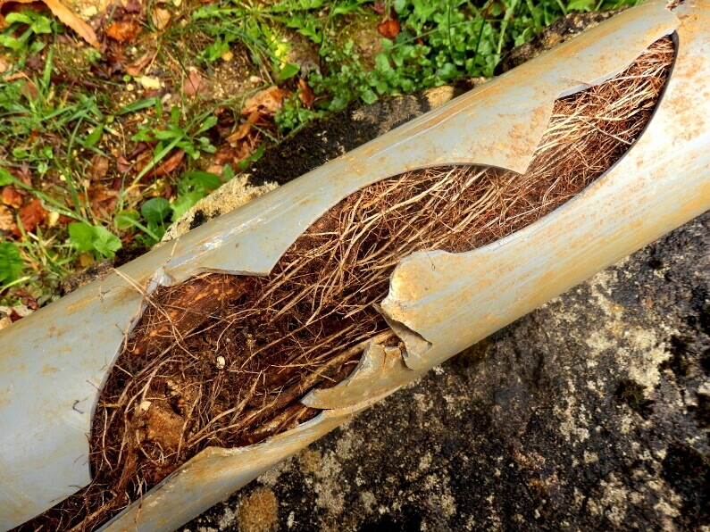 When to Replace Sewer Line in South Carolina: The Definitive Guide